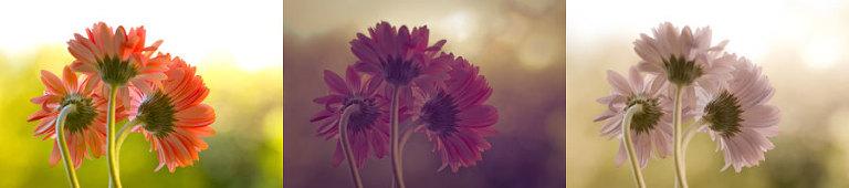 Effects of Lightroom Presets: Dandelion, AtLast, Dreamy