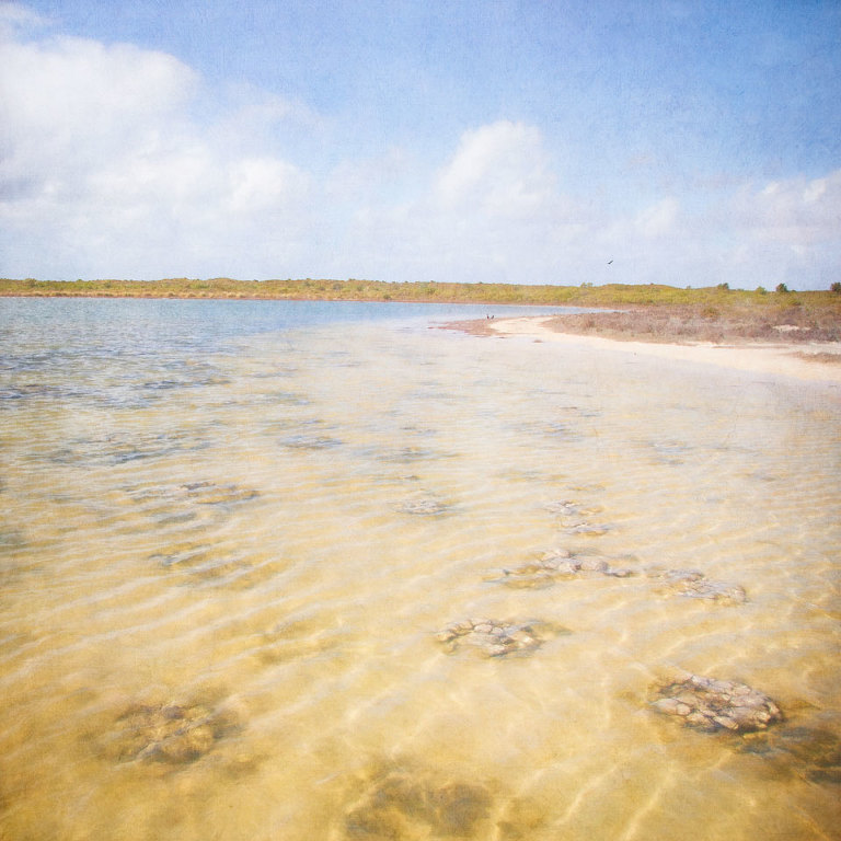 Thrombolites and stromatolites at Lake Thetis, Cervantes, Western Australia